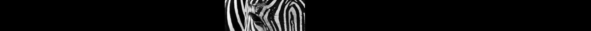 Follow the Zebras